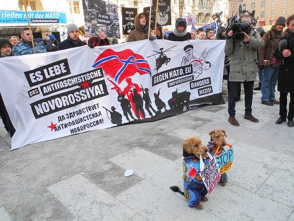 Novorossiya Dogs